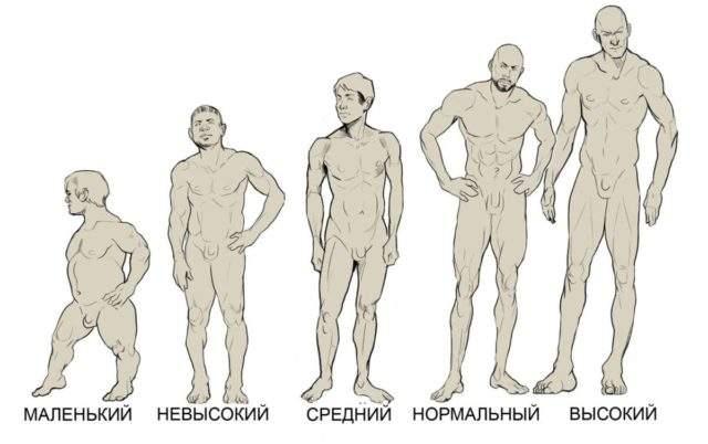 До скольки ростет мужской член