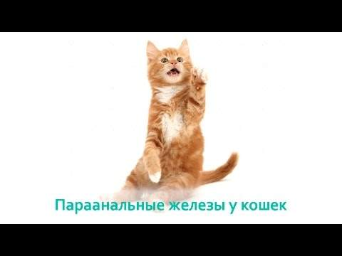 b1d85aeae3e708852e9f1e60b32638c5.jpg