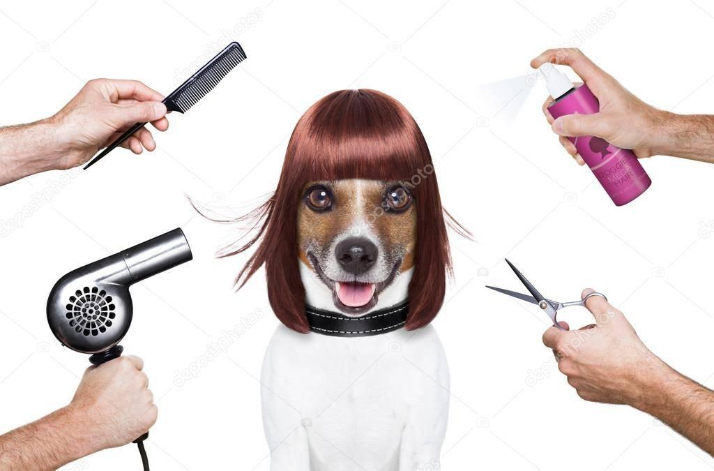 Грумер: что это за профессия, как стать парикмахером для животных