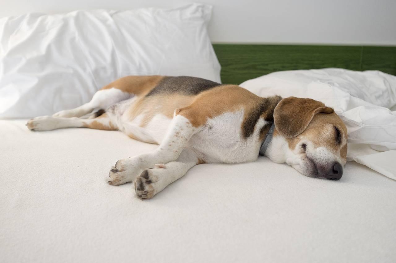 Как приучить щенка ночью спать. как приучить щенка спать ночью: полезные советы как приучить щенка спать на своем месте - новая медицина