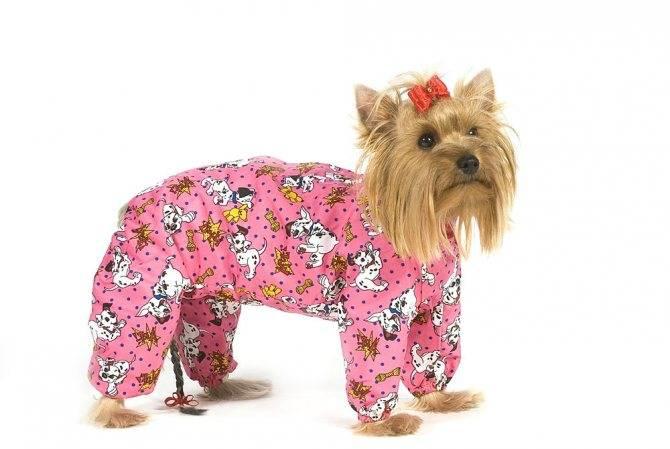 Как выглядит йоркширский терьер: стандарт породы и фото популярных видов собак