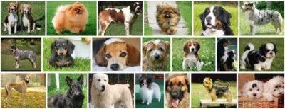 Породы собак средних размеров, фотографии и названия
