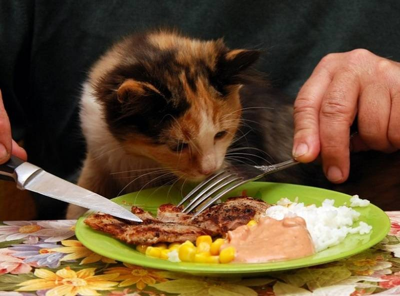 Как помочь коту в жару дома: водные процедуры, стрижка