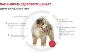 Что такое алиментный щенок - женский журнал