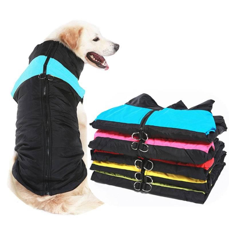 ᐉ как выбрать комбинезон для собаки? - ➡ motildazoo.ru