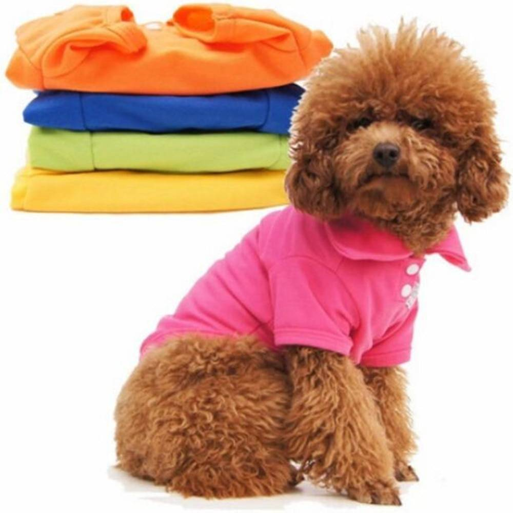 Одежда для собак: зачем она нужна и как ее выбрать?