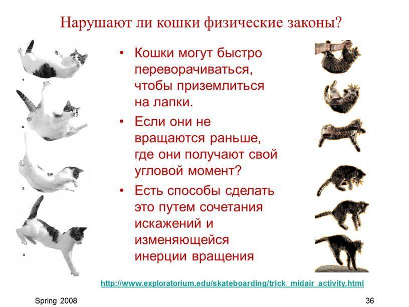 Что может повлиять на кошачий характер