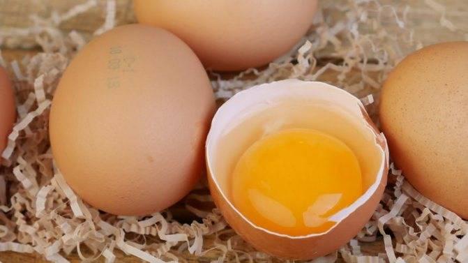 Можно ли собакам сырые яйца: скорлупу, давать, вареное