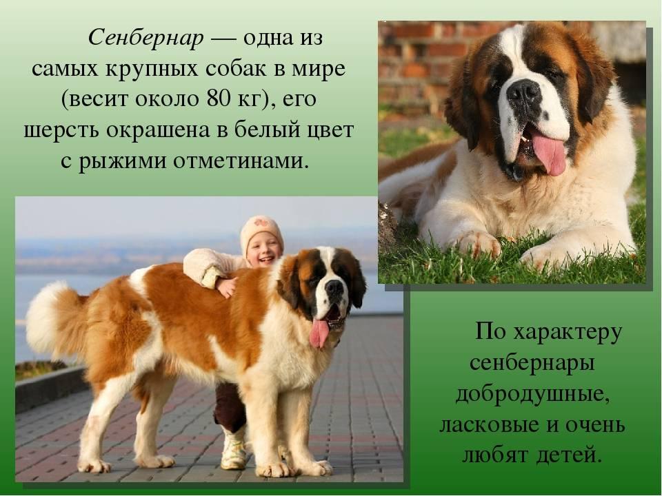 Топ-10 самых лучших пород собак в мире