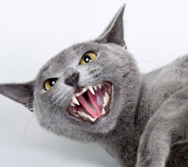 Как отучить котенка царапать и кусать: советы экспертов?