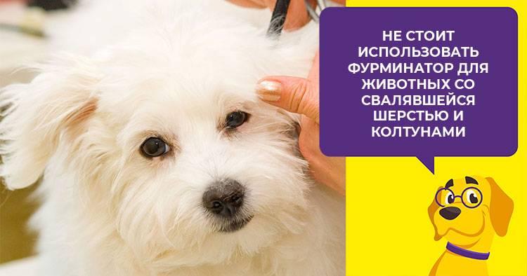 Как выбрать фурминатор для собак