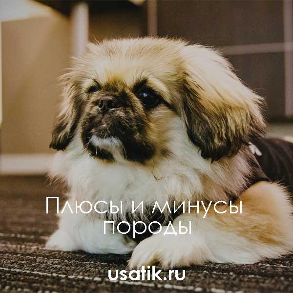Сколько стоят собаки: самые дешевые породы