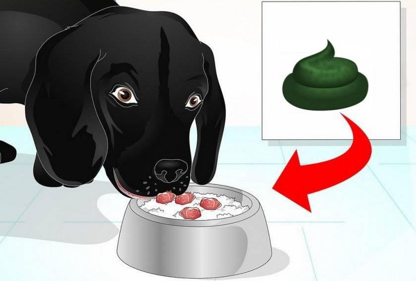 Желтый понос у собак: причины, что делать, методы лечения в домашних условиях