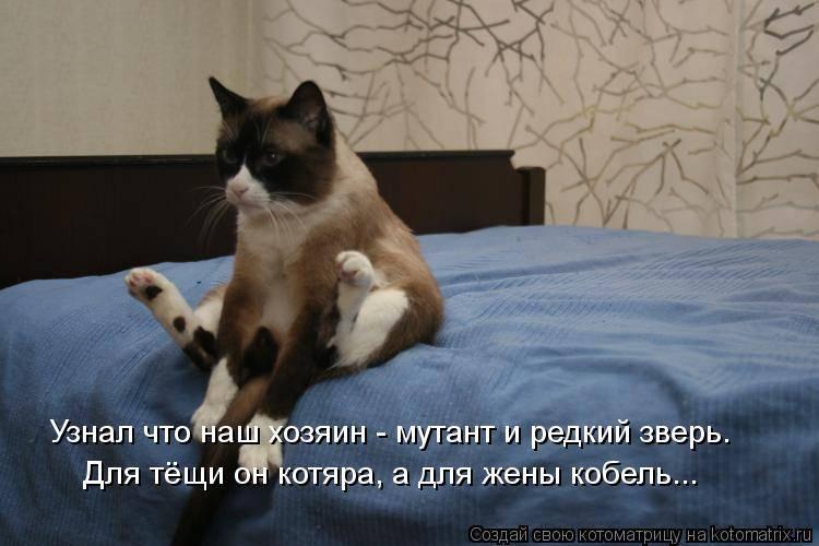 Умеют ли кошки думать на самом деле: что они мыслят про своих хозяев