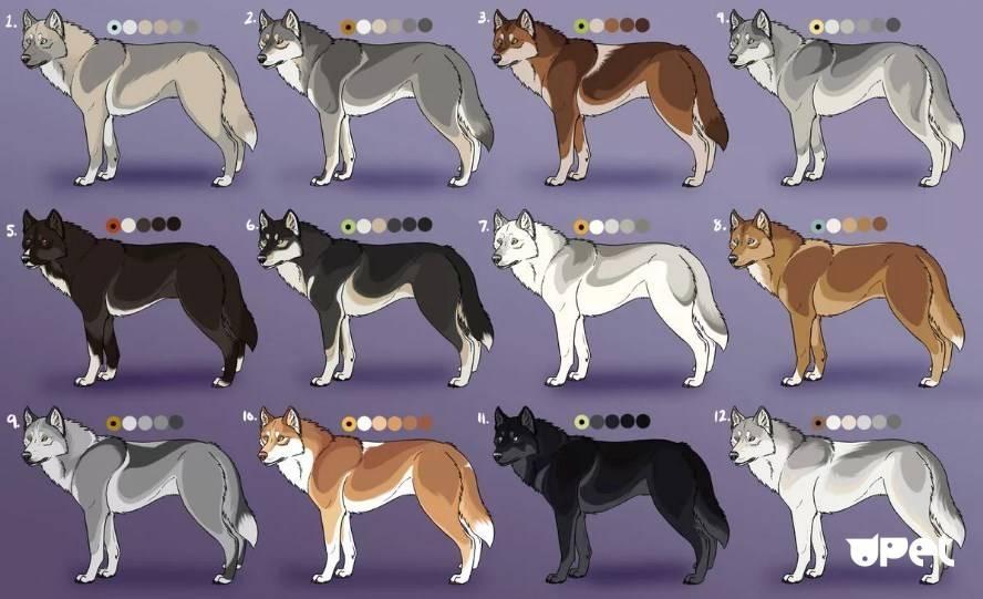 Хаски (собака): характеристика сибирской породы