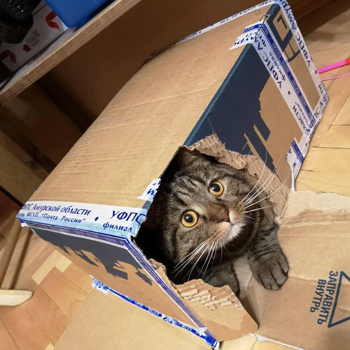 Почему кошки любят коробки? причины, фото и видео