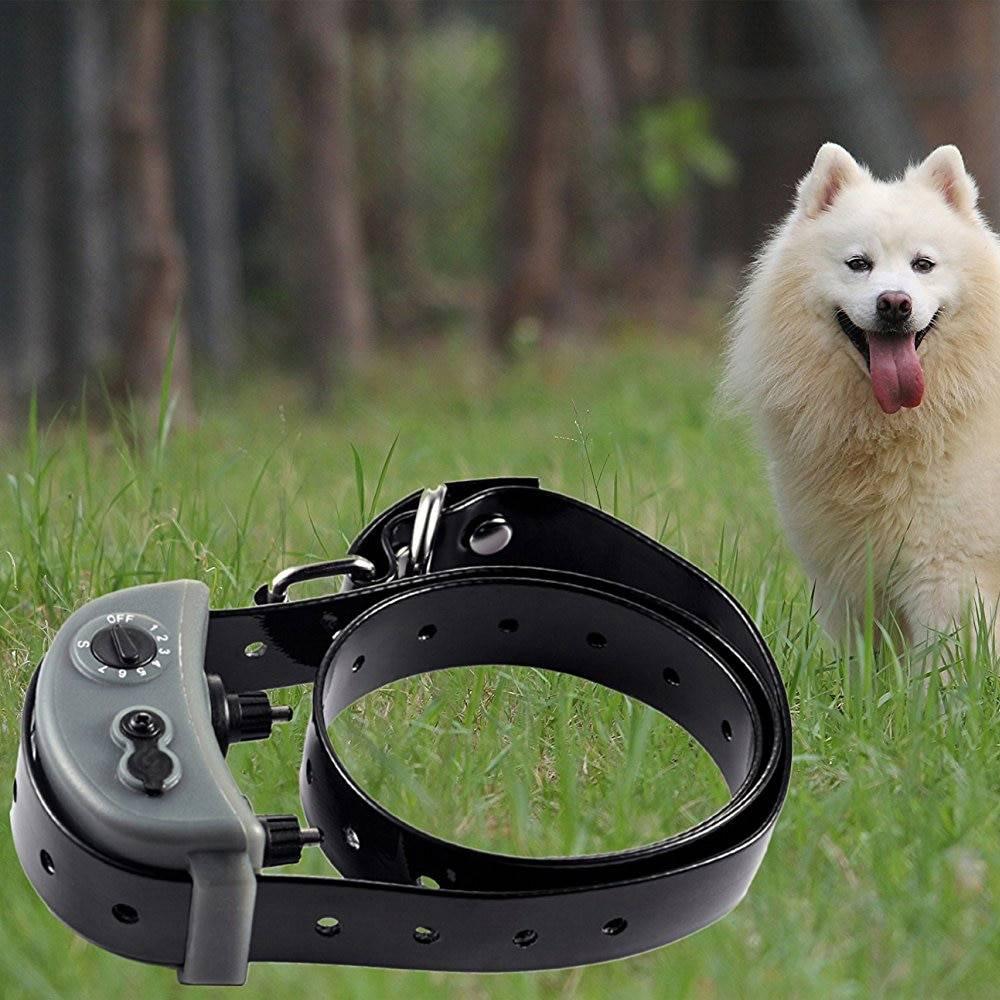 Ошейник для собак с электрошоком — назначение, правила использования