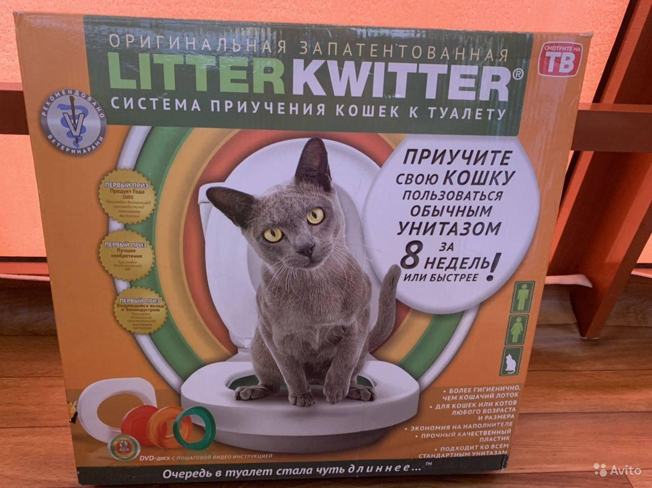 Как приучить котенка к унитазу ? в домашних условиях: инструкция по приучению животного к туалету