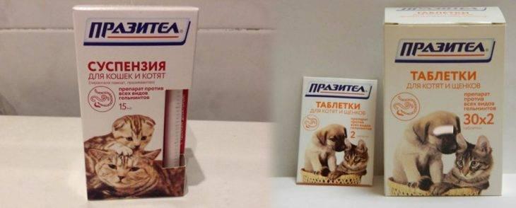 «празител» суспензия для кошек и котят: инструкция по применению