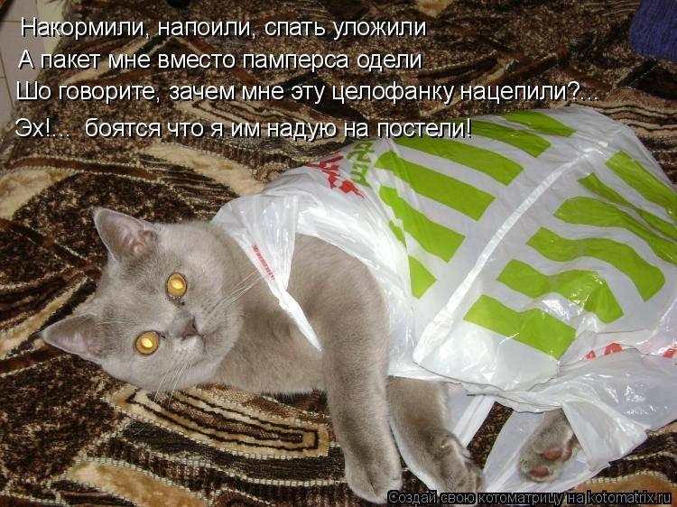 Памперсы для котов и кошек: особенности выбора и использования подгузников для котят и взрослых животных