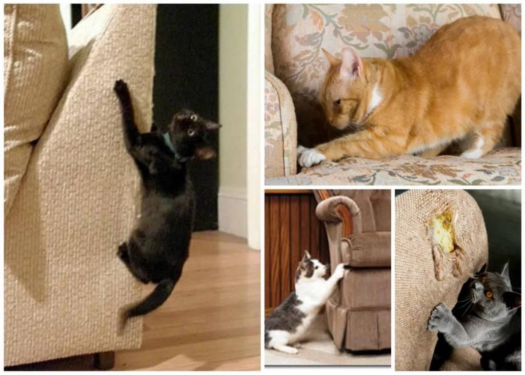Причины обдирания котом обоев и мебели, многообразие решений проблем с животным