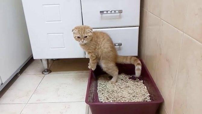 У кота понос с кровью – причины и лечение в домашних условиях, в клинике