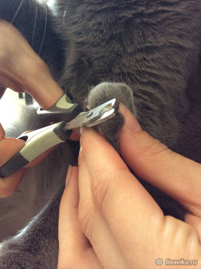Как правильно подстричь когти коту или кошке дома