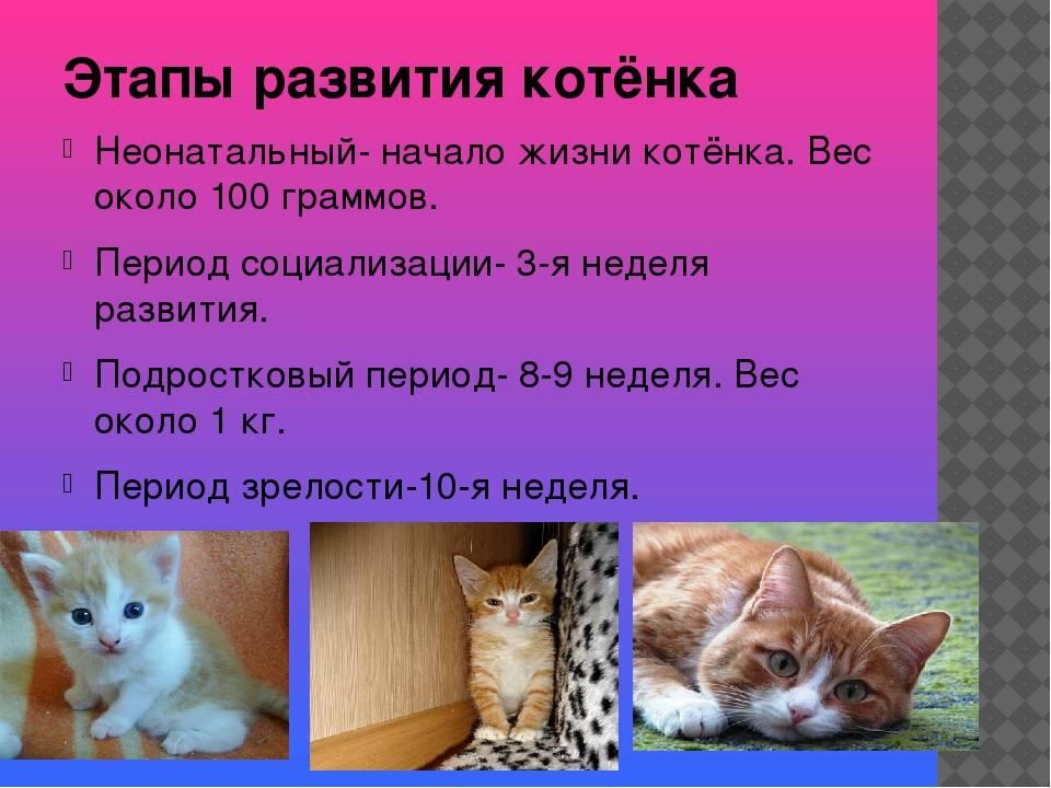 Развитие котят по неделям: что нужно знать хозяину развитие котят по неделям: что нужно знать хозяину