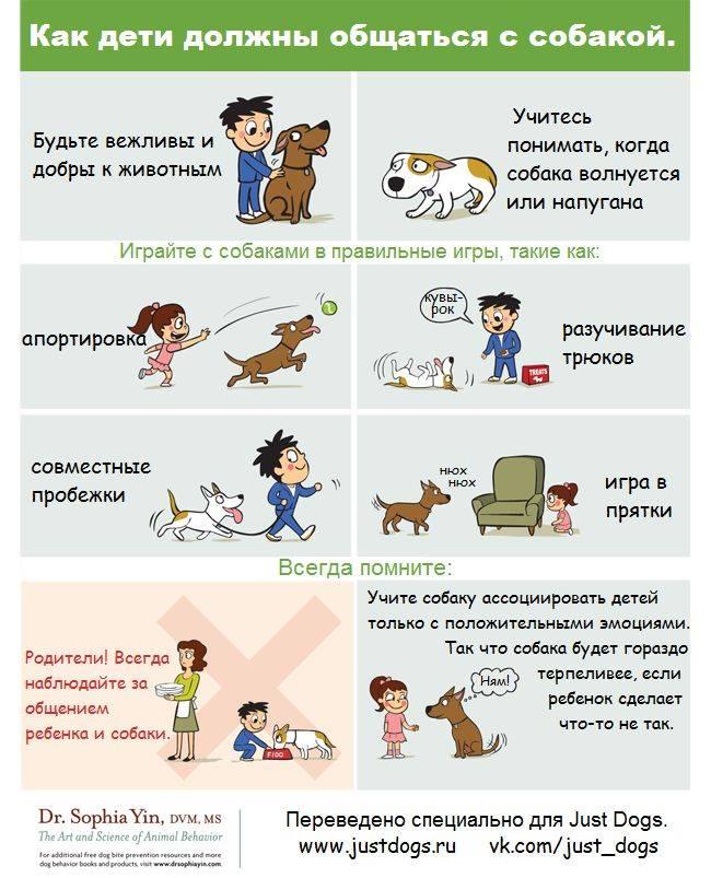 Как ухаживать за собакой: 9 процедур, без которых не обойдется ни один четверолапый