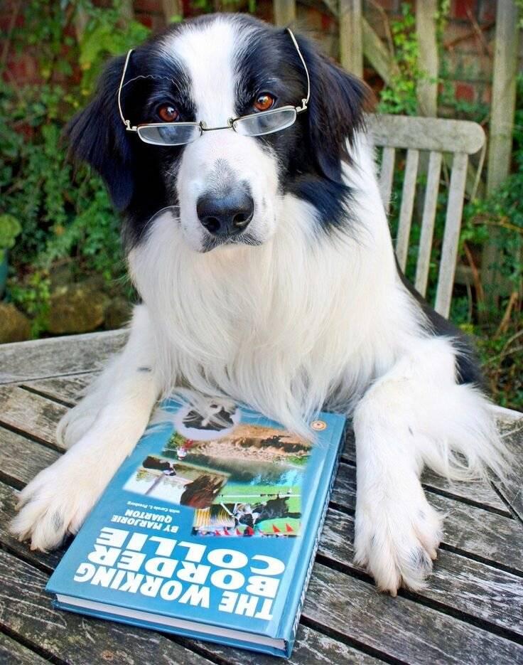 13 самых добрых и ласковых пород собак в мире: какие подходят для семьи