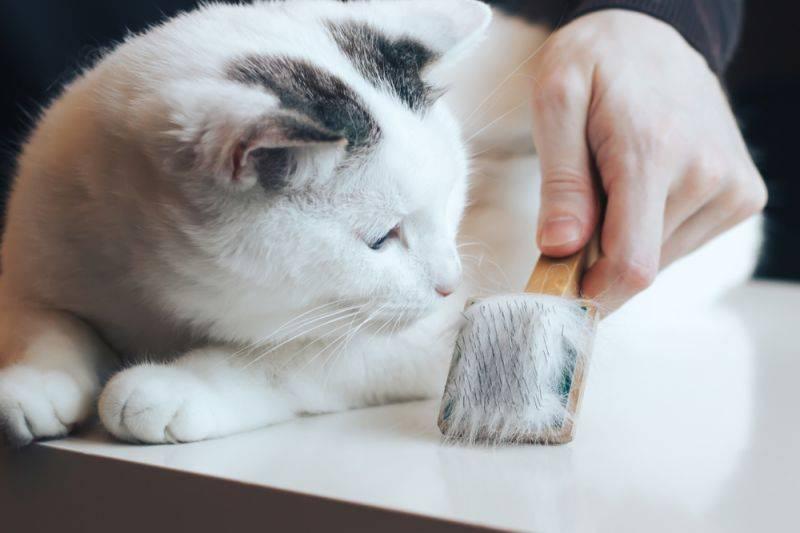 Как избавиться от шерсти кошки в квартире: примеры в домашних условиях