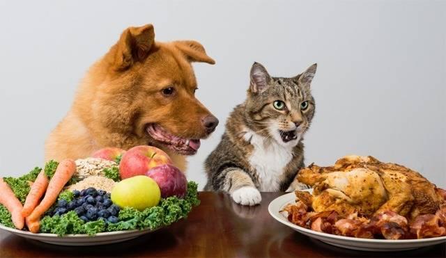Почему собакам нельзя давать свинину: особенности рациона питомцев