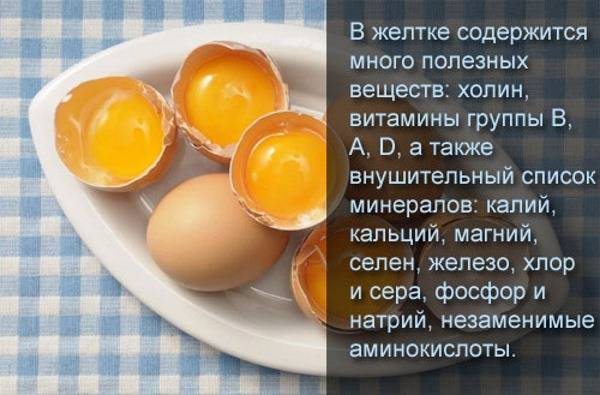 Можно ли собак кормить яйцами: сырыми и вареными