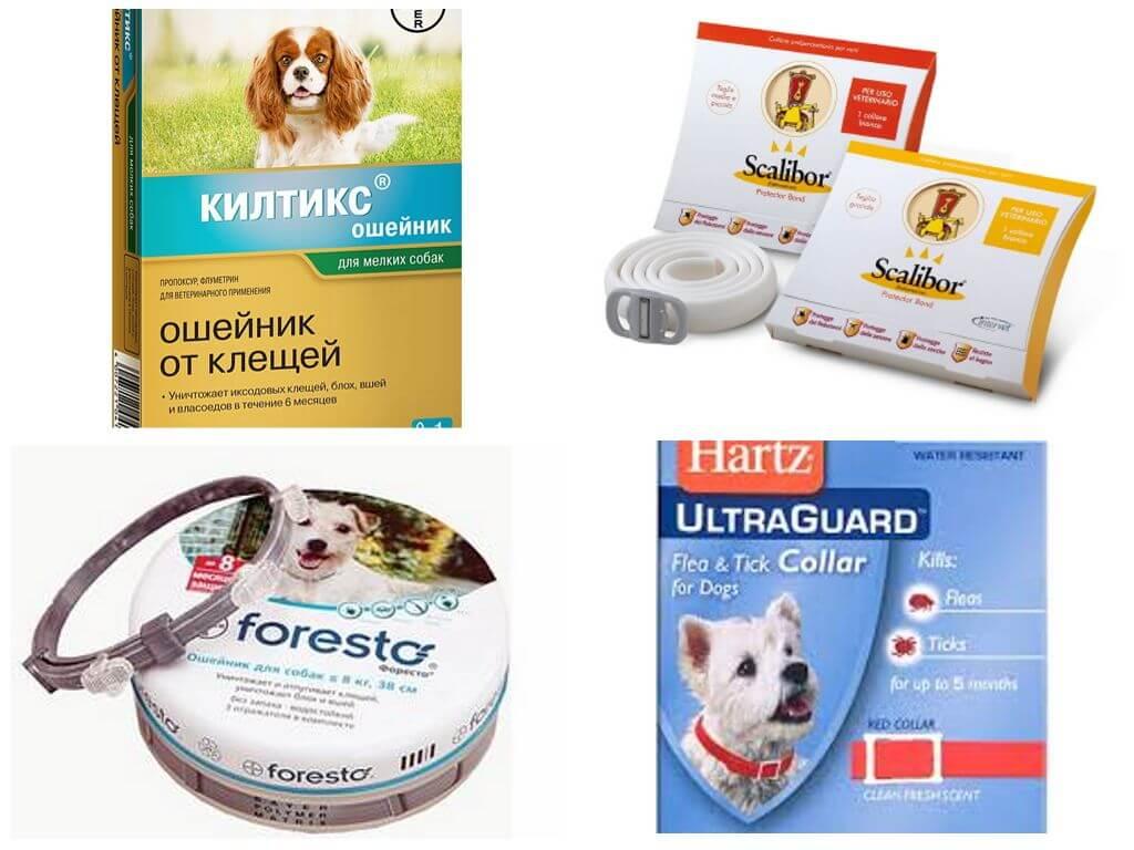 Ошейник от блох и клещей для собак и кошек: принцип действия и виды, рейтинг лучших, как пользоваться