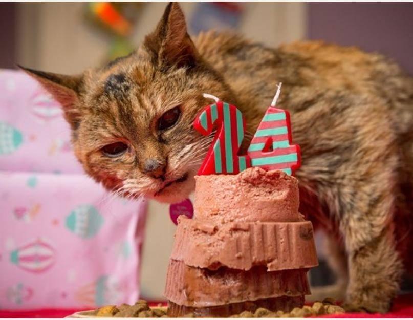 Самый старый кот и кошка: долгожители в мире