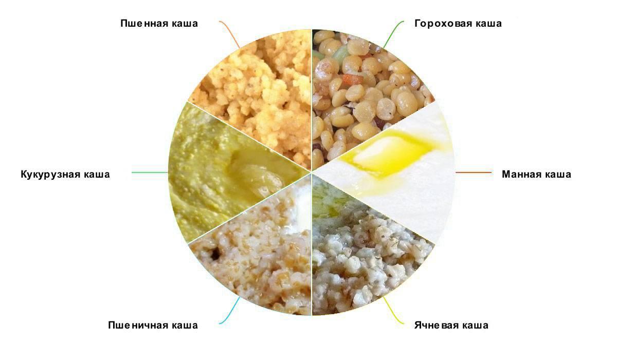 Каши для собак: как правильно варить, рецепты, какие можно давать