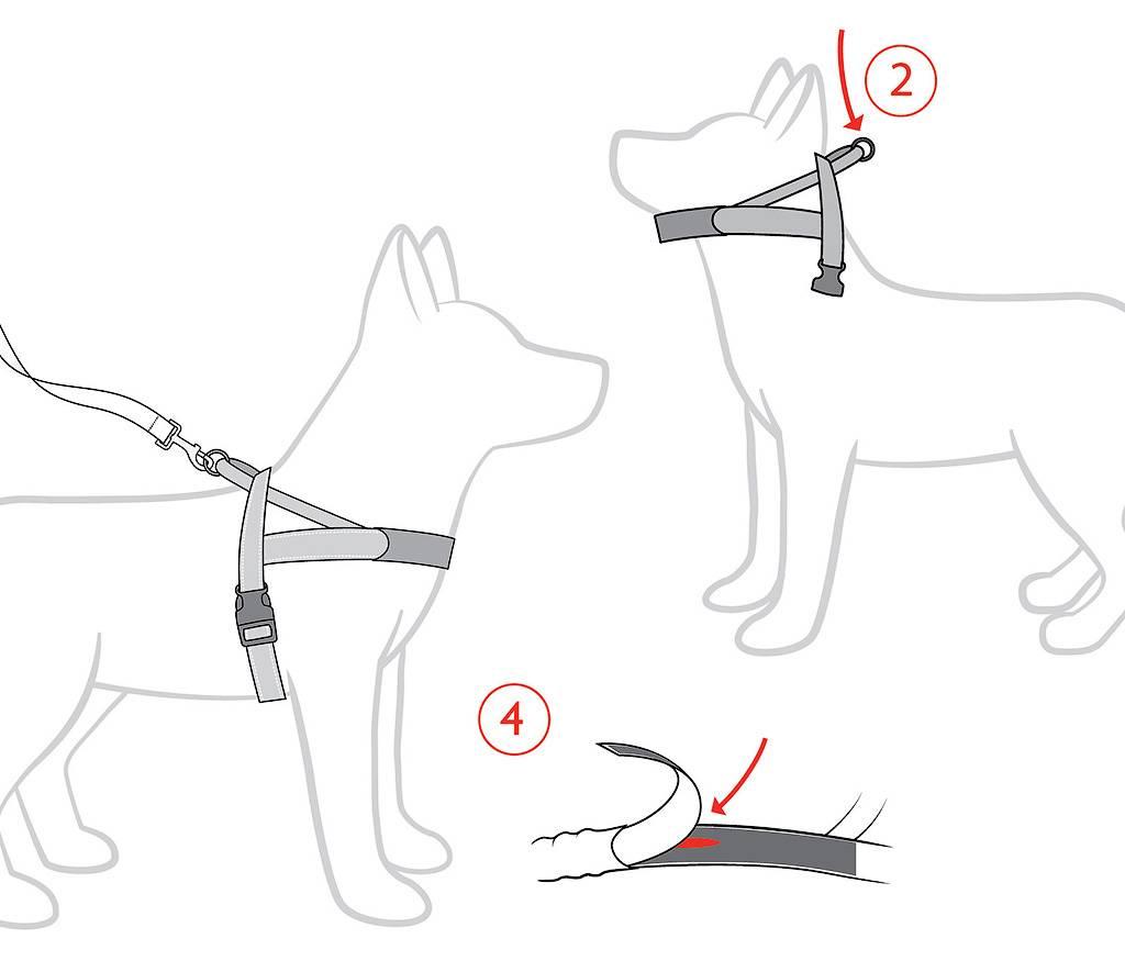 Как одеть шлейку на собаку: выбор, изготовление амуниции своими руками