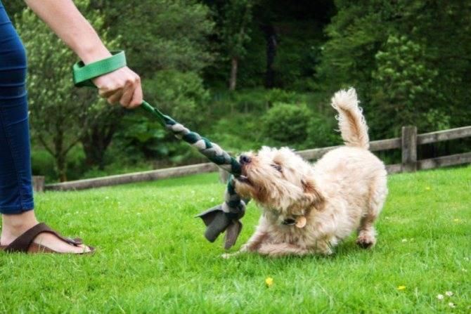 Как научить собаку команде стоять. обучение собаки команде стоять, видео по дрессировке - dogtricks.ru