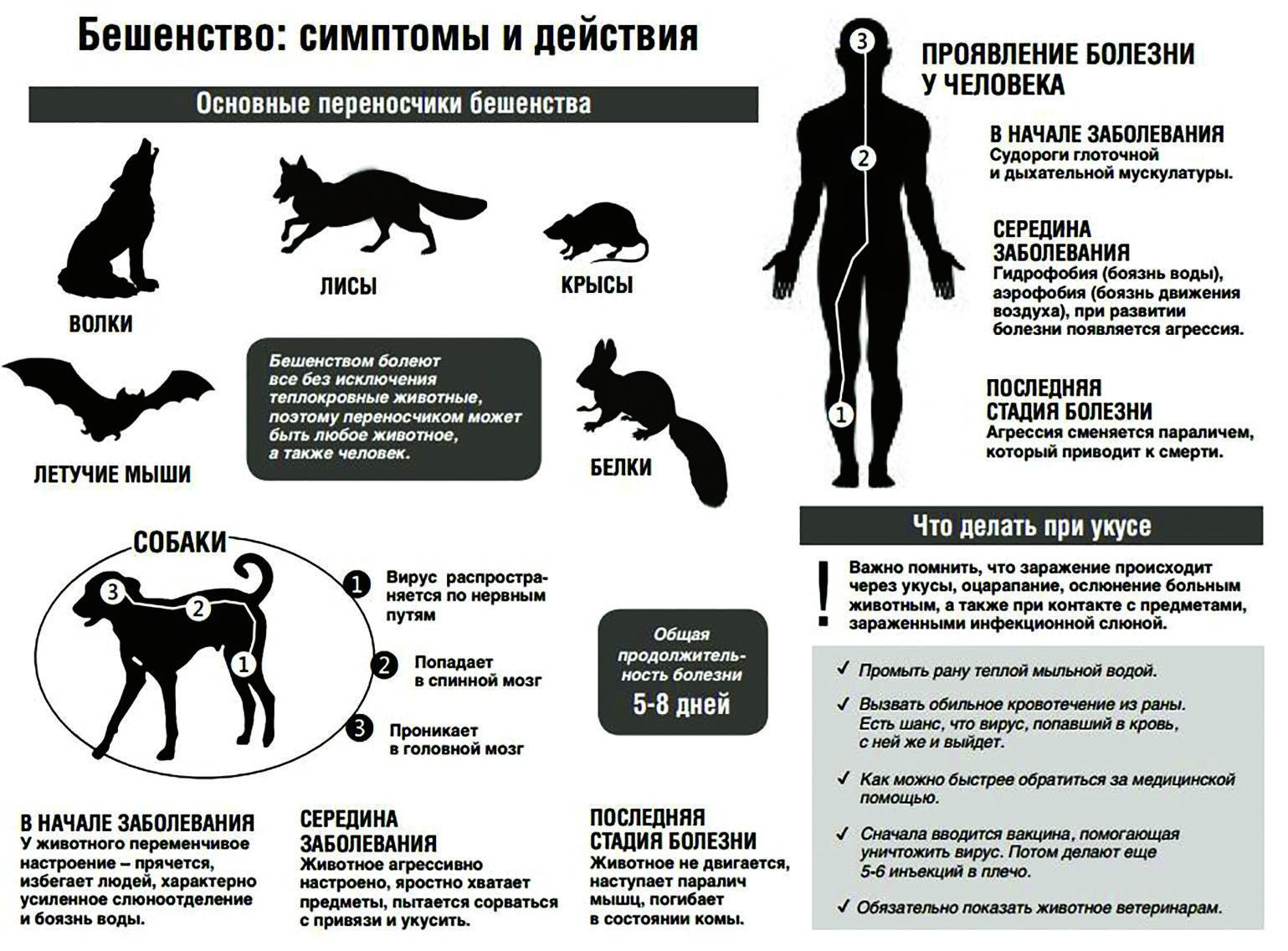 Описание симптомов и способов лечения всех болезней у котов: сводные таблицы