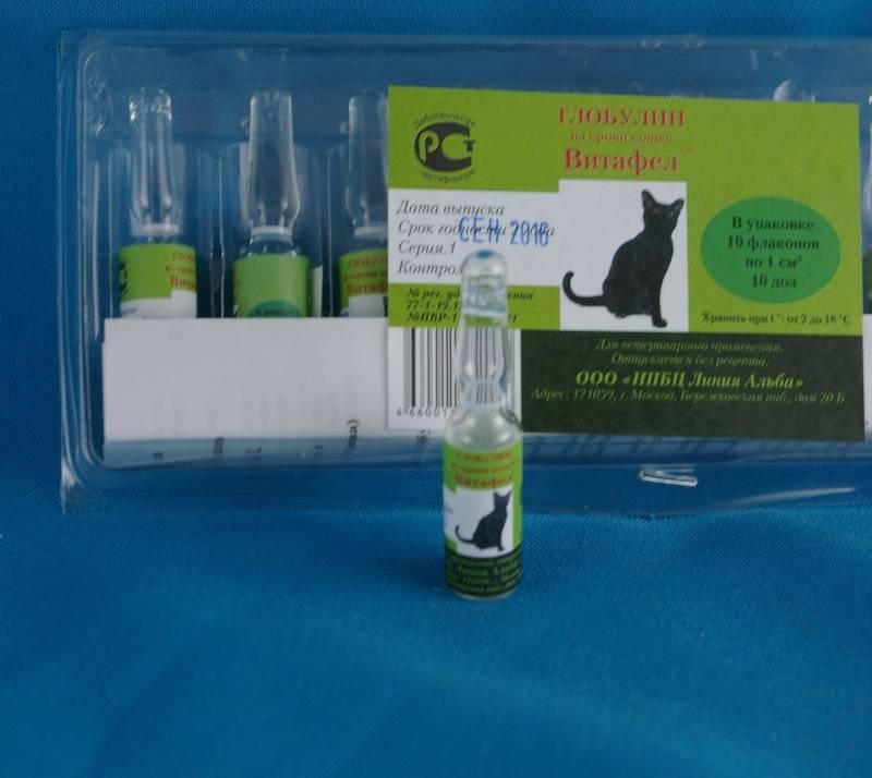 Витафел для кошек – средство для лечения и профилактики инфекций