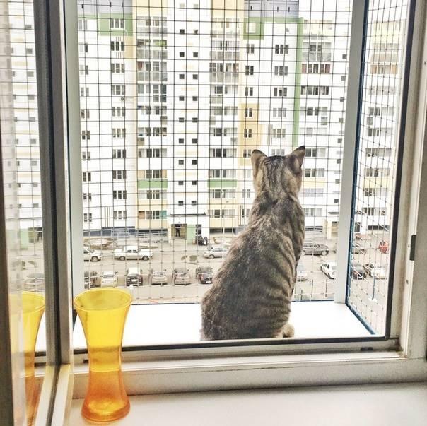 Почему кошка умывается: приметы