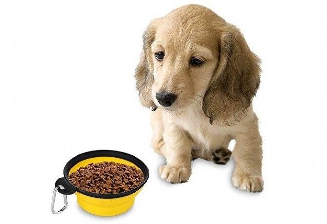 Рацион кормящей (лактирующей) собаки