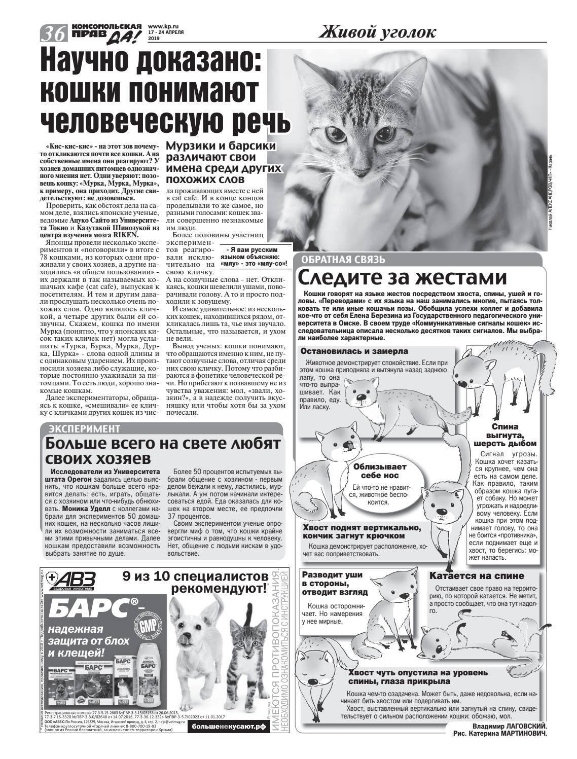 Понимают ли кошки человеческую речь: факты из экспериментов и наблюдений