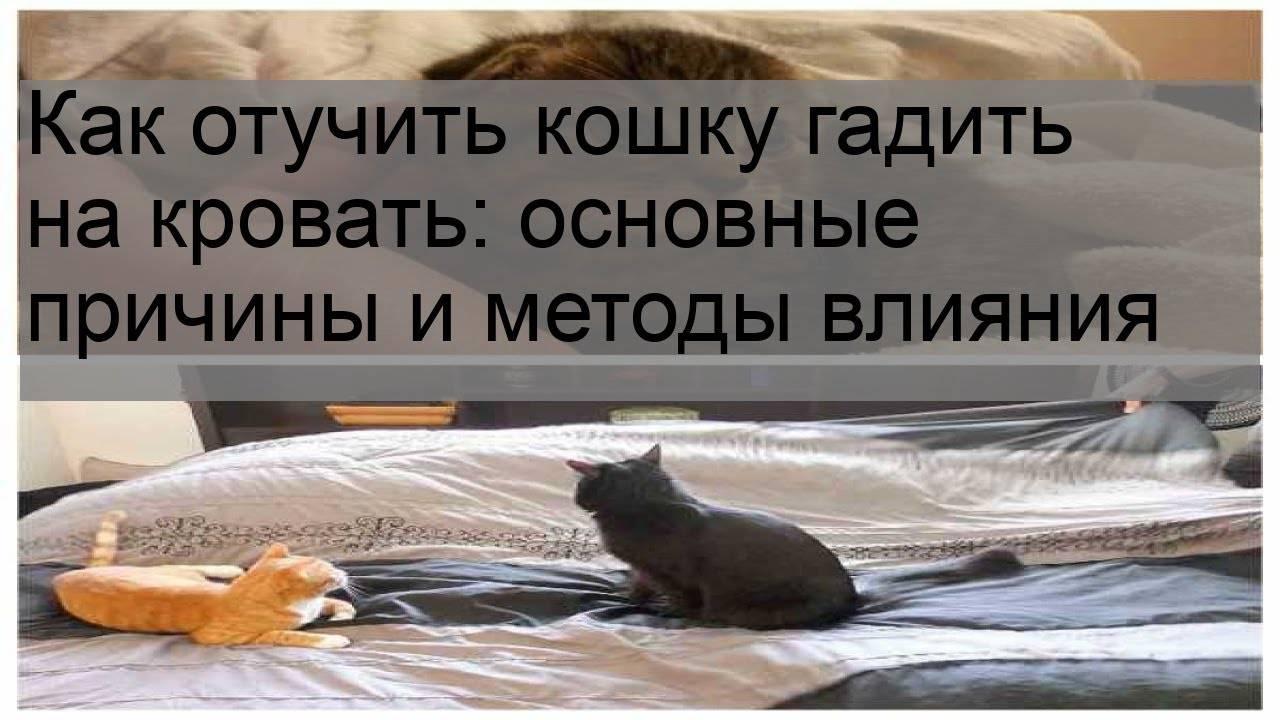 Как отучить собаку писать на кровать: хозяина, дома