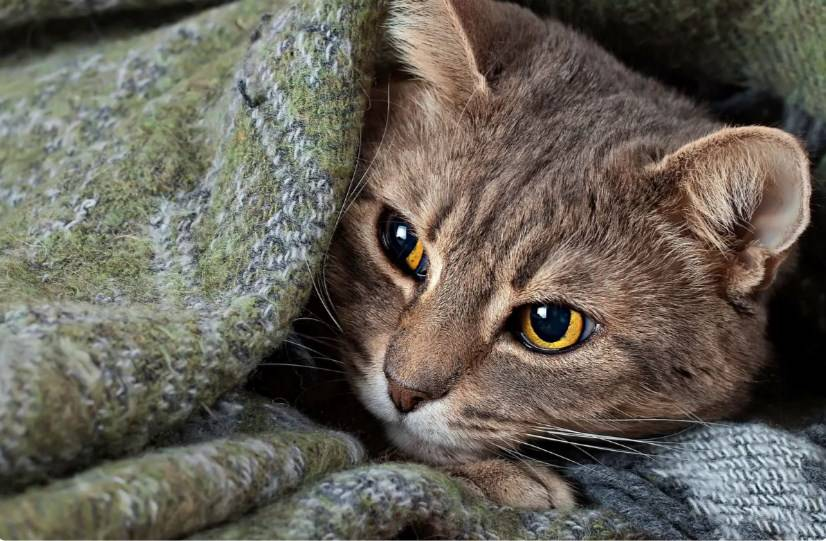 6 неожиданных вещей, которых боятся кошки