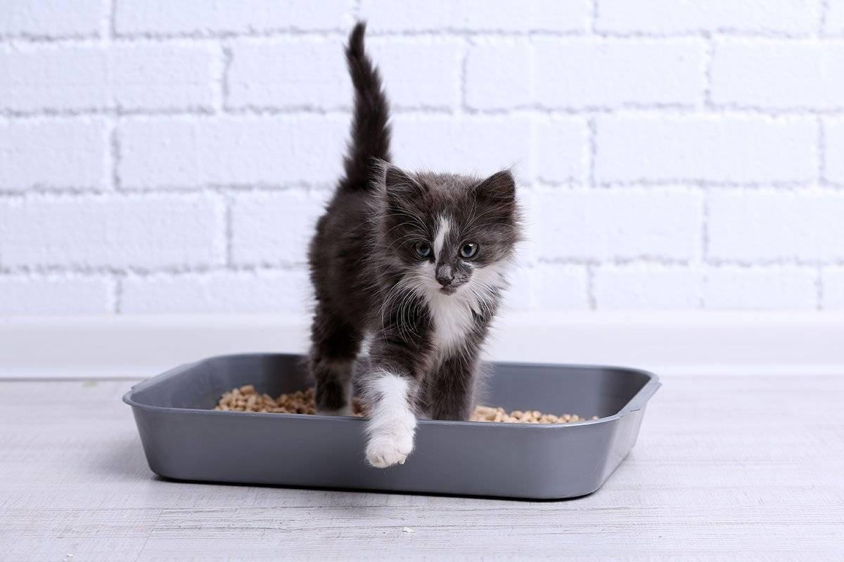 Почему кошка гадит не в лоток, а на пол: советы профессионалов
