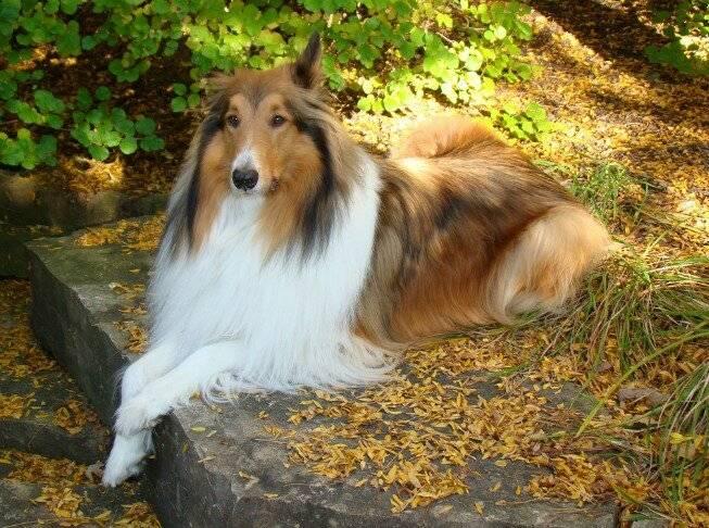 Самые активные породы собак для пеших прогулок и скалолазания