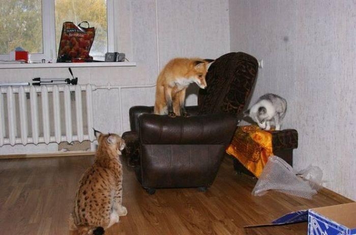 Топ самых лучших пород кошек для квартиры