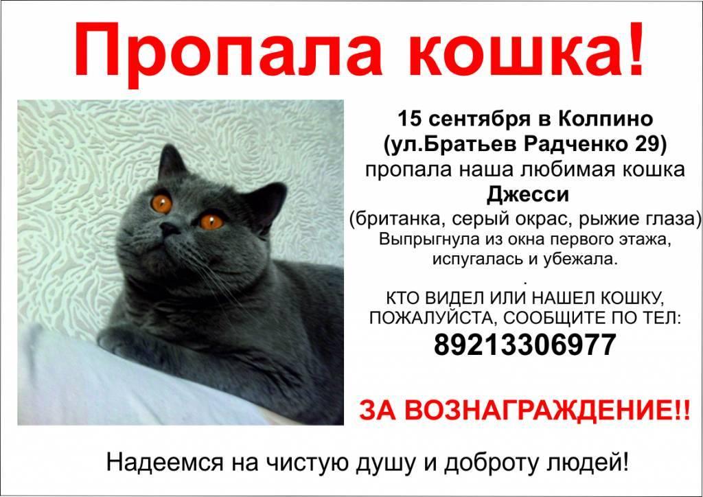 Зверинец по соседству. как люди живут с десятками кошек и почему готовы тратить на них последние деньги