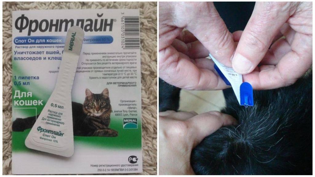 Таблетки от клещей для кошек: препараты для животных
